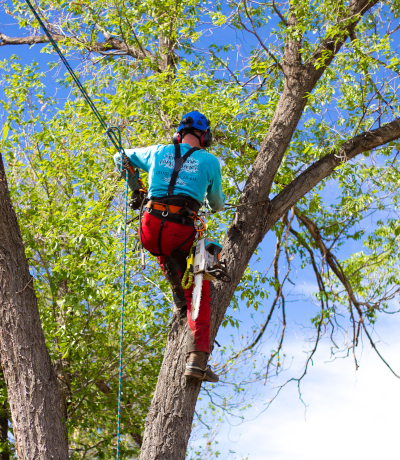 Very_Good_Tree_Service_Service_Maintenance